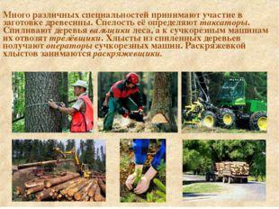 Много различных специальностей принимают участие в заготовке древесины. Спел