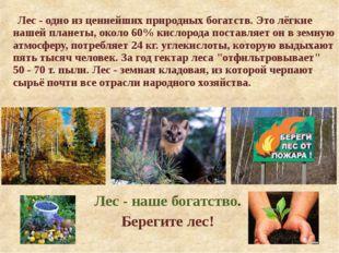 Лес - одно из ценнейших природных богатств. Это лёгкие нашей планеты, около