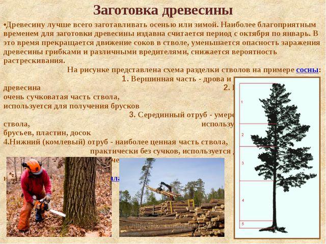 Заготовка древесины Древесину лучше всего заготавливать осенью или зимой. Наи...