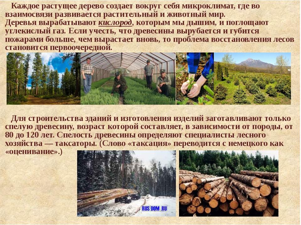 Каждое растущее дерево создает вокруг себя микроклимат, где во взаимосвязи ра...