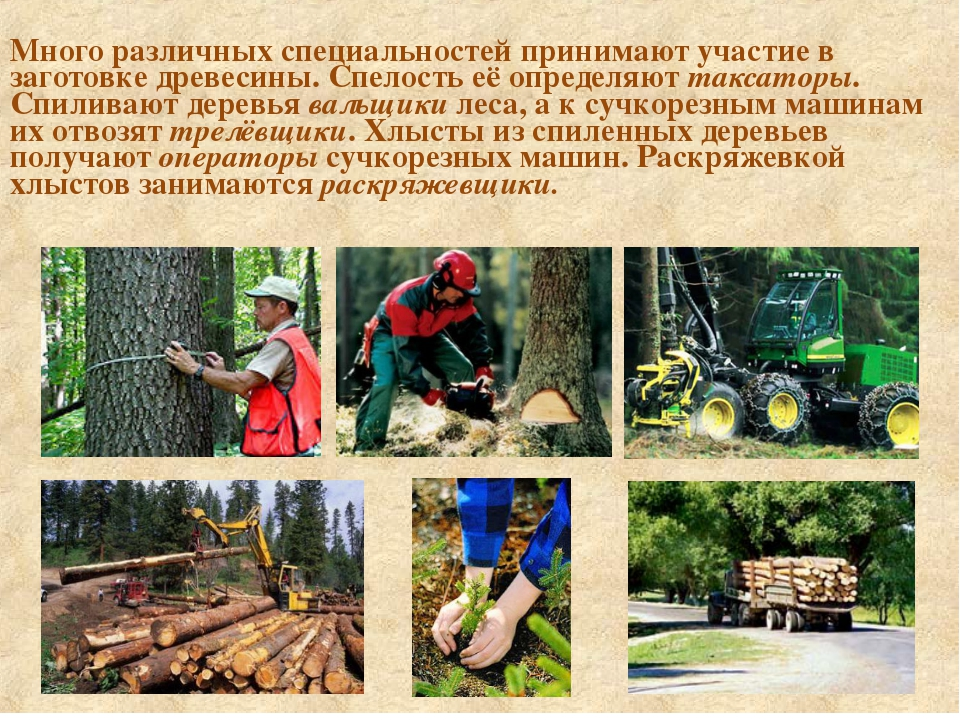 Много различных специальностей принимают участие в заготовке древесины. Спел...