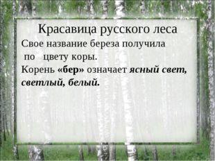 Красавица русского леса Свое название береза получила по цвету коры. Корень
