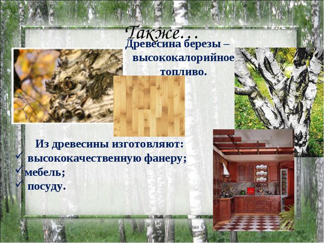 Также… Древесина березы – высококалорийное топливо. Из древесины изготовляют:...