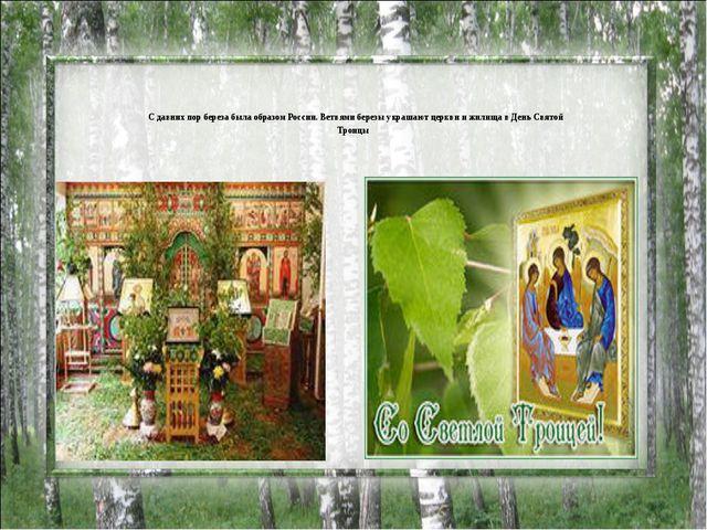С давних пор береза была образом России. Ветвями березы украшают церкви и жи...