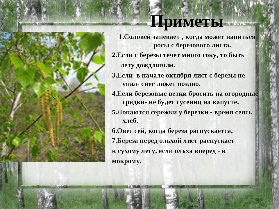 Приметы 1.Соловей запевает , когда может напиться росы с березового листа. 2....