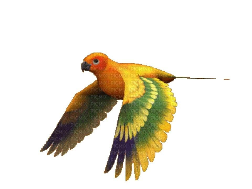 Картинки анимации птичек