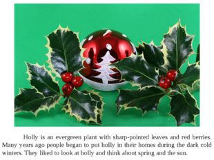 Holly is an evergreen plant with sharp-pointed leaves and red berries. Many