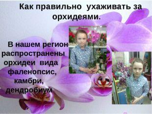 Ю. Как правильно ухаживать за орхидеями. В нашем регионе распространены орхид