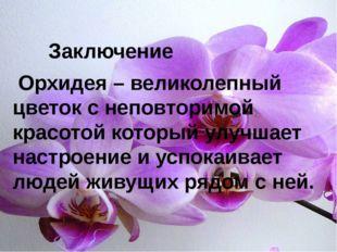 Орхидея – великолепный цветок с неповторимой красотой который улучшает настр