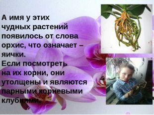 А имя у этих чудных растений появилось от слова орхис, что означает – яички.