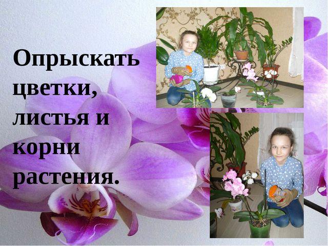 Опрыскать цветки, листья и корни растения.