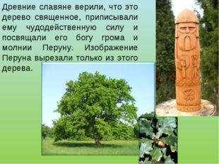 Древние славяне верили, что это дерево священное, приписывали ему чудодействе