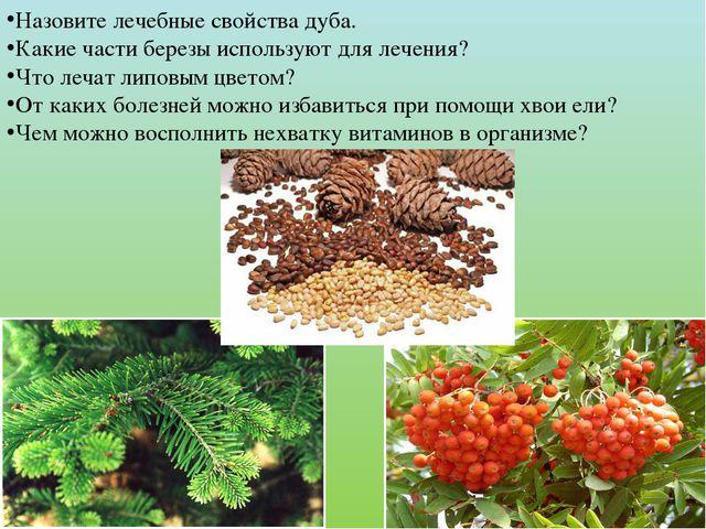 Назовите лечебные свойства дуба. Какие части березы используют для лечения? Ч...