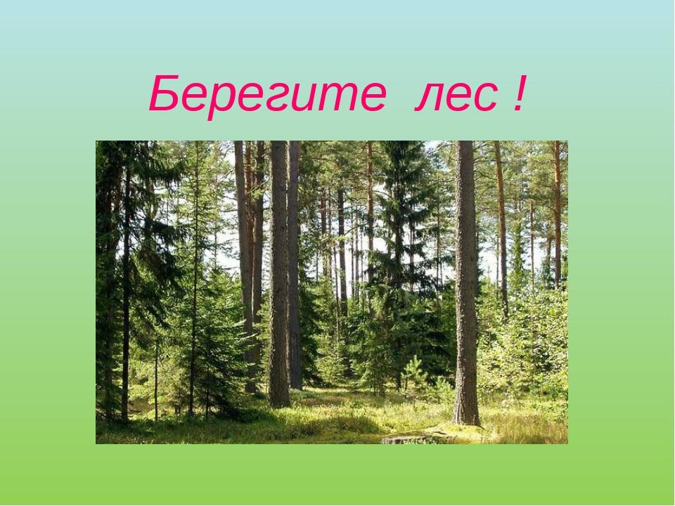Берегите лес !