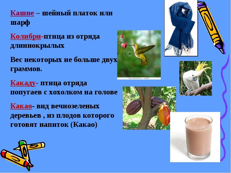 Кашне – шейный платок или шарф Колибри-птица из отряда длиннокрылых Вес неко...