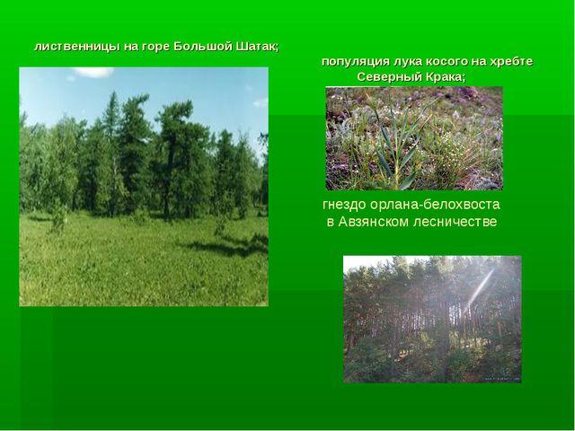 лиственницы на горе Большой Шатак; популяция лука косого на хребте Северный К...