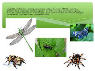 Задание. Выберите из ниже предложенных слайдов насекомое Якутии , которому со