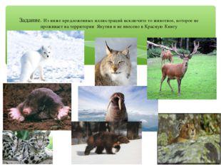 Задание. Из ниже предложенных иллюстраций исключите то животное, которое не п