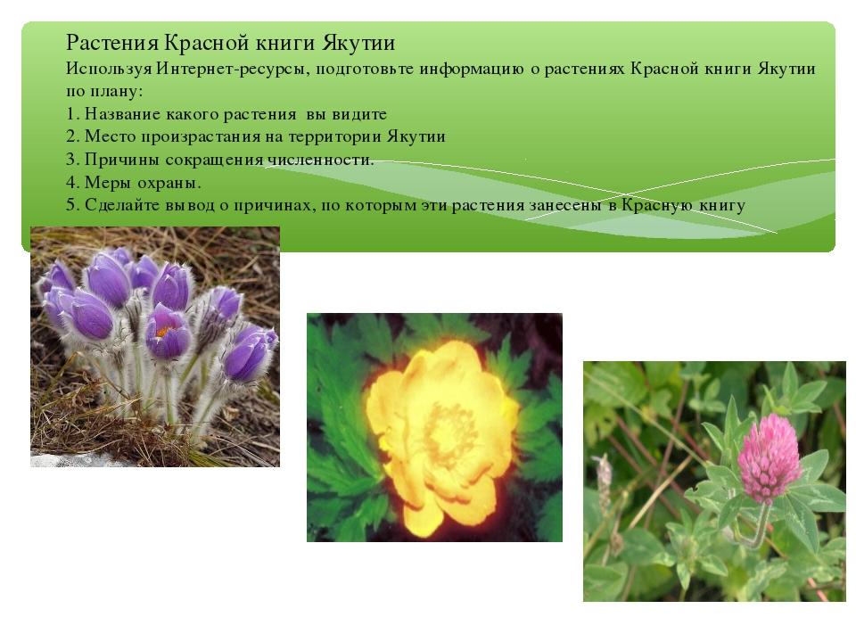 Растения Красной книги Якутии Используя Интернет-ресурсы, подготовьте информ...