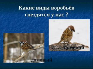 Какие виды воробьёв гнездятся у нас ? домовый полевой