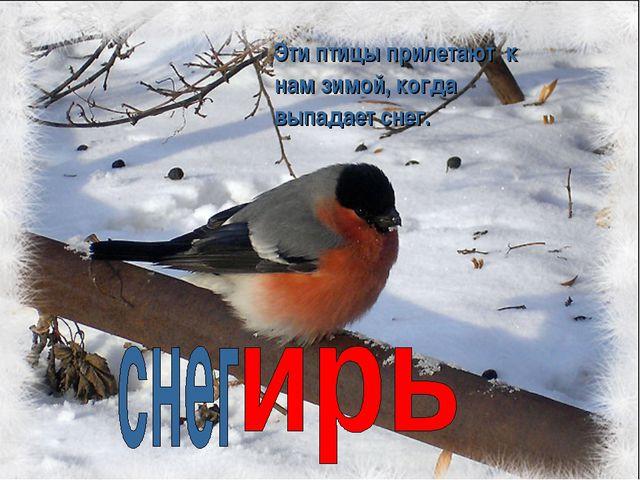 Эти птицы прилетают к нам зимой, когда выпадает снег.