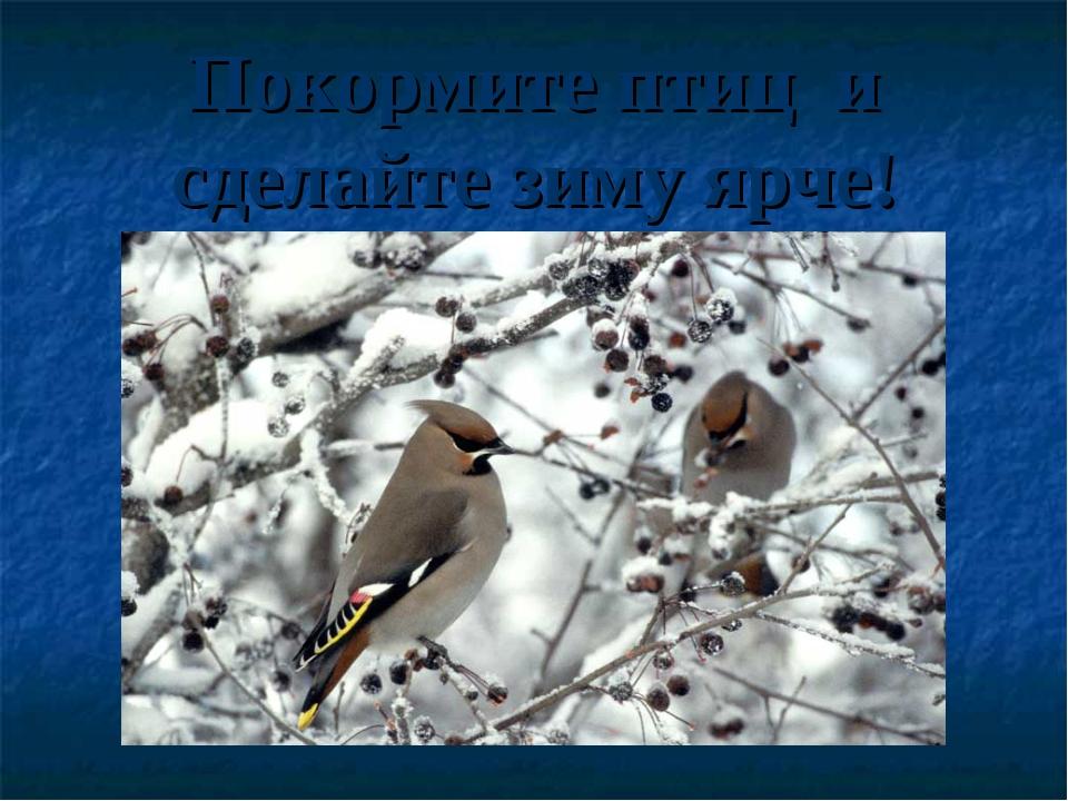 Покормите птиц и сделайте зиму ярче!