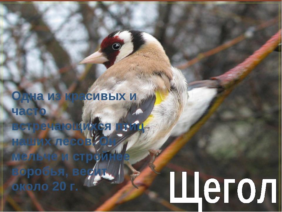 Одна из красивых и часто встречающихся птиц наших лесов. Он мельче и стройнее...