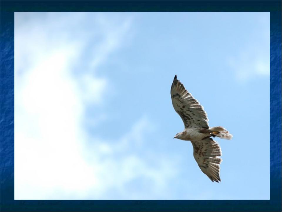 полет ястреб flight hawk скачать