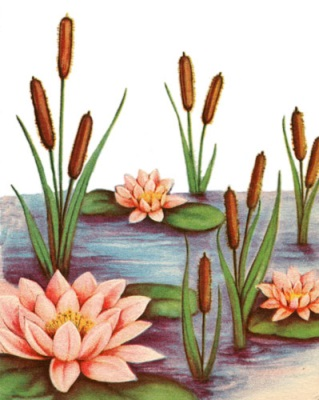 http://karenswhimsy.com/public-domain-images/water-lilies/full/water-lilies-5.jpg