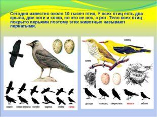 Сегодня известно около 10 тысяч птиц. У всех птиц есть два крыла, две ноги и