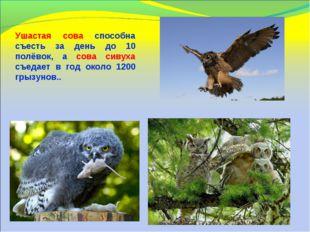 Ушастая сова способна съесть за день до 10 полёвок, а сова сивуха съедает в