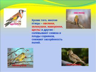 Кроме того, многие птицы – овсянки, зеленушки, жаворонки, щеглы и другие - с