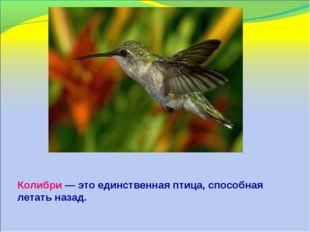 Колибри — это единственная птица, способная летать назад.