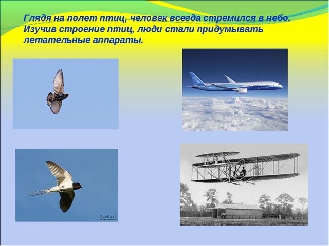 Глядя на полет птиц, человек всегда стремился в небо. Изучив строение птиц, л...