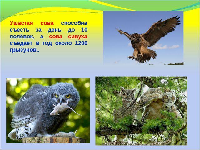 Ушастая сова способна съесть за день до 10 полёвок, а сова сивуха съедает в...