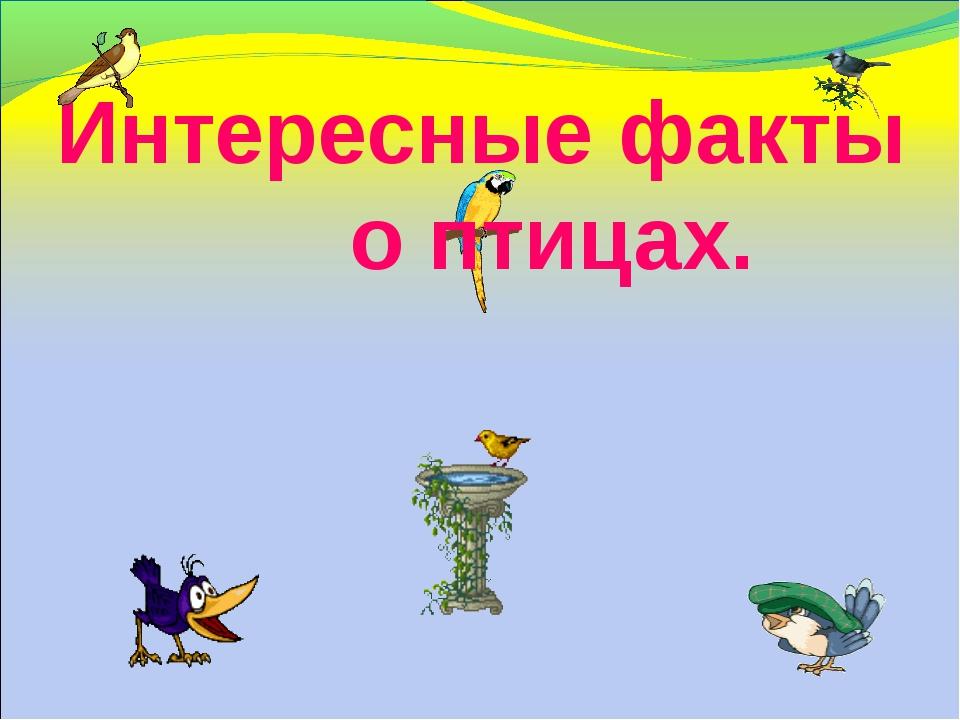 Интересные факты о птицах.