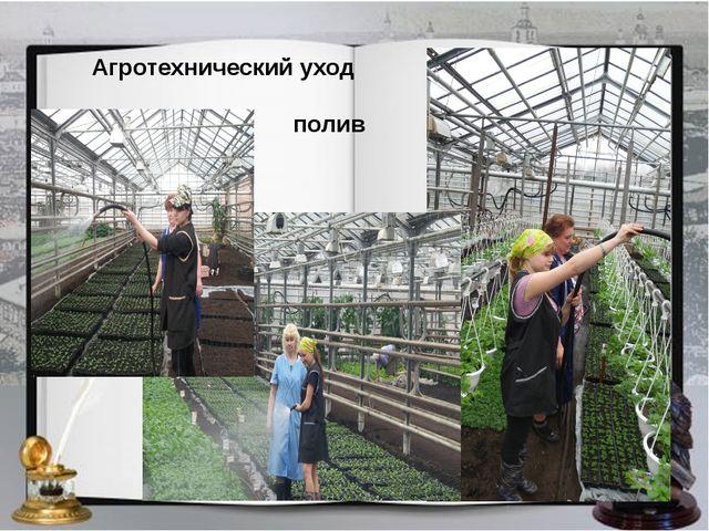Агротехнический уход полив