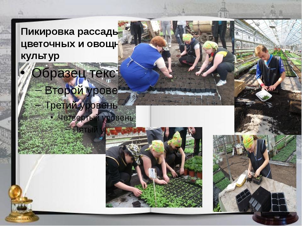Пикировка рассады цветочных и овощных культур