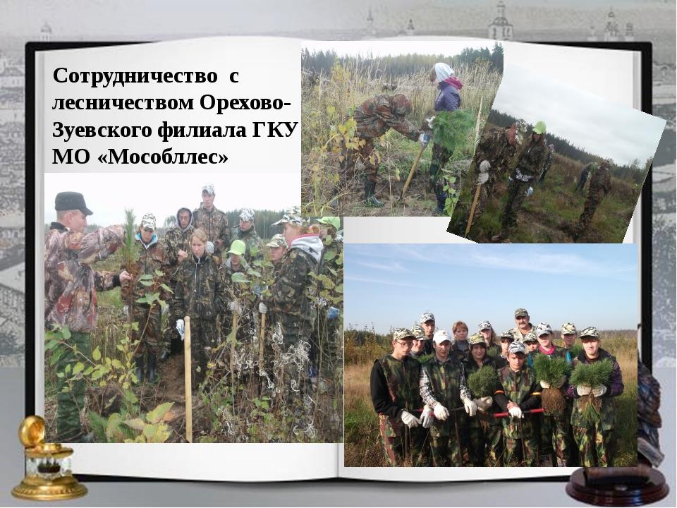 Сотрудничество с лесничеством Орехово-Зуевского филиала ГКУ МО «Мособллес»