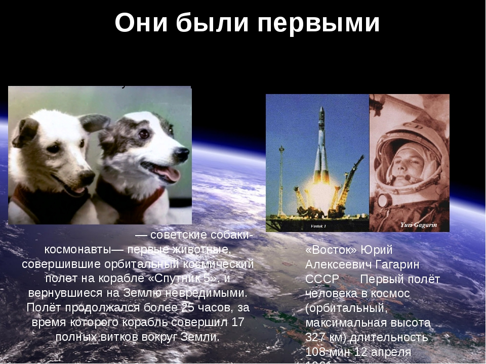 Они были первыми Бе́лка и Стре́лка— советские собаки-космонавты— первые живо...