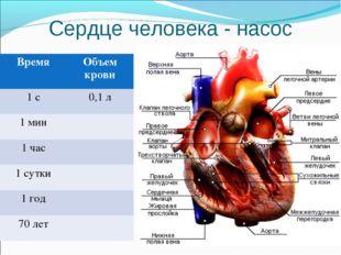 Сердце человека - насос ВремяОбъем крови 1 с0,1 л 1 мин 1 час 1 сутки 1