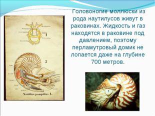 Головоногие моллюски из рода наутилусов живут в раковинах. Жидкость и газ на