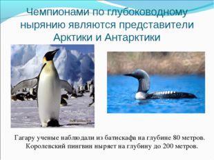 Чемпионами по глубоководному нырянию являются представители Арктики и Антаркт