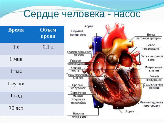 Сердце человека - насос ВремяОбъем крови 1 с0,1 л 1 мин 1 час 1 сутки 1...
