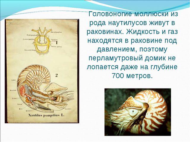 Головоногие моллюски из рода наутилусов живут в раковинах. Жидкость и газ на...