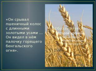 «Он срывал пшеничный колос с длинными золотыми усами … Он видел в нём палочку