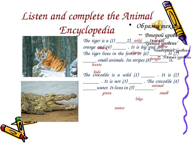 Listen and complete the Animal Encyclopedia The tiger is a (1) ____2)______....