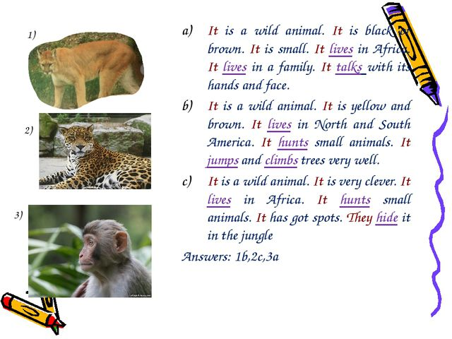 It is a wild animal. It is black or brown. It is small. It lives in Africa. I...