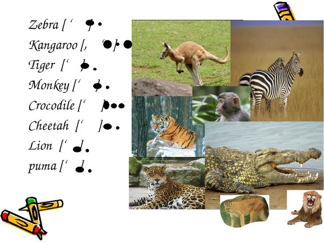 Zebra [ ' ] Kangaroo [, ' ] Tiger [' ] Monkey [' ] Crocodile [' ] Cheetah ['...