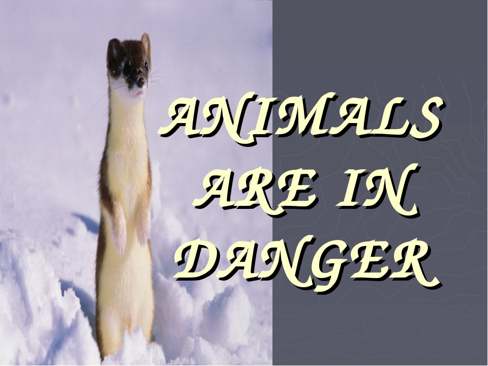 ANIMALS ARE IN DANGER